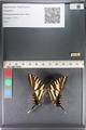 http://mczbase.mcz.harvard.edu/specimen_images/ent-lepidoptera/images/2011_07_01/IMG_089545.JPG