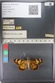 http://mczbase.mcz.harvard.edu/specimen_images/ent-lepidoptera/images/2011_07_11/IMG_090096.JPG