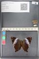 http://mczbase.mcz.harvard.edu/specimen_images/ent-lepidoptera/images/2011_07_21/IMG_091857.JPG