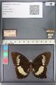 http://mczbase.mcz.harvard.edu/specimen_images/ent-lepidoptera/images/2011_07_21/IMG_091880.JPG
