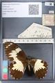 http://mczbase.mcz.harvard.edu/specimen_images/ent-lepidoptera/images/2011_07_25/IMG_092093.JPG