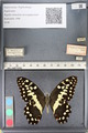 http://mczbase.mcz.harvard.edu/specimen_images/ent-lepidoptera/images/2011_07_25/IMG_092187.JPG