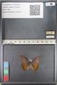 http://mczbase.mcz.harvard.edu/specimen_images/ent-lepidoptera/images/2011_07_28/IMG_092740.JPG