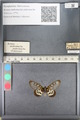 http://mczbase.mcz.harvard.edu/specimen_images/ent-lepidoptera/images/2011_08_01/IMG_092851.JPG