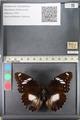 http://mczbase.mcz.harvard.edu/specimen_images/ent-lepidoptera/images/2011_08_02/IMG_093331.JPG