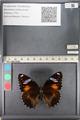 http://mczbase.mcz.harvard.edu/specimen_images/ent-lepidoptera/images/2011_08_02/IMG_093346.JPG
