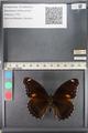 http://mczbase.mcz.harvard.edu/specimen_images/ent-lepidoptera/images/2011_08_02/IMG_093354.JPG