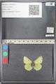 http://mczbase.mcz.harvard.edu/specimen_images/ent-lepidoptera/images/2011_08_11/IMG_094826.JPG
