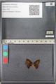 http://mczbase.mcz.harvard.edu/specimen_images/ent-lepidoptera/images/2011_08_11/IMG_094855.JPG