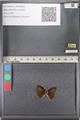 http://mczbase.mcz.harvard.edu/specimen_images/ent-lepidoptera/images/2011_08_11/IMG_094856.JPG
