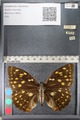 http://mczbase.mcz.harvard.edu/specimen_images/ent-lepidoptera/images/2011_10_24/IMG_105155.JPG