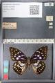 http://mczbase.mcz.harvard.edu/specimen_images/ent-lepidoptera/images/2011_10_24/IMG_105167.JPG