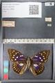 http://mczbase.mcz.harvard.edu/specimen_images/ent-lepidoptera/images/2011_10_24/IMG_105168.JPG