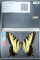 http://mczbase.mcz.harvard.edu/specimen_images/ent-lepidoptera/images/2011_11_21/IMG_107560.JPG