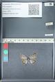 http://mczbase.mcz.harvard.edu/specimen_images/ent-lepidoptera/images/2012_01_09/IMG_109957.JPG