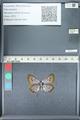 http://mczbase.mcz.harvard.edu/specimen_images/ent-lepidoptera/images/2012_01_09/IMG_109958.JPG