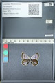 http://mczbase.mcz.harvard.edu/specimen_images/ent-lepidoptera/images/2012_01_09/IMG_109959.JPG
