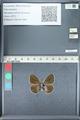 http://mczbase.mcz.harvard.edu/specimen_images/ent-lepidoptera/images/2012_01_09/IMG_109960.JPG