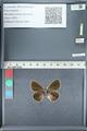 http://mczbase.mcz.harvard.edu/specimen_images/ent-lepidoptera/images/2012_01_09/IMG_109961.JPG