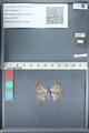 http://mczbase.mcz.harvard.edu/specimen_images/ent-lepidoptera/images/2012_01_09/IMG_109962.JPG