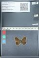http://mczbase.mcz.harvard.edu/specimen_images/ent-lepidoptera/images/2012_01_09/IMG_109963.JPG