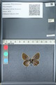 http://mczbase.mcz.harvard.edu/specimen_images/ent-lepidoptera/images/2012_01_09/IMG_109965.JPG
