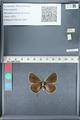 http://mczbase.mcz.harvard.edu/specimen_images/ent-lepidoptera/images/2012_01_09/IMG_109966.JPG