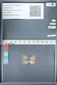 http://mczbase.mcz.harvard.edu/specimen_images/ent-lepidoptera/images/2012_01_09/IMG_109967.JPG