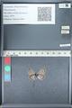 http://mczbase.mcz.harvard.edu/specimen_images/ent-lepidoptera/images/2012_01_09/IMG_109969.JPG
