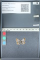 http://mczbase.mcz.harvard.edu/specimen_images/ent-lepidoptera/images/2012_01_09/IMG_109970.JPG