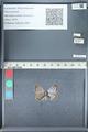 http://mczbase.mcz.harvard.edu/specimen_images/ent-lepidoptera/images/2012_01_09/IMG_109971.JPG