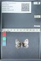 http://mczbase.mcz.harvard.edu/specimen_images/ent-lepidoptera/images/2012_01_09/IMG_109982.JPG