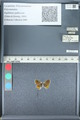 http://mczbase.mcz.harvard.edu/specimen_images/ent-lepidoptera/images/2012_01_09/IMG_109990.JPG