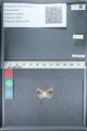 http://mczbase.mcz.harvard.edu/specimen_images/ent-lepidoptera/images/2012_01_09/IMG_109993.JPG