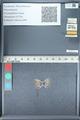 http://mczbase.mcz.harvard.edu/specimen_images/ent-lepidoptera/images/2012_01_09/IMG_110001.JPG