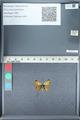 http://mczbase.mcz.harvard.edu/specimen_images/ent-lepidoptera/images/2012_01_09/IMG_110027.JPG