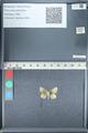 http://mczbase.mcz.harvard.edu/specimen_images/ent-lepidoptera/images/2012_01_09/IMG_110029.JPG