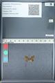 http://mczbase.mcz.harvard.edu/specimen_images/ent-lepidoptera/images/2012_01_09/IMG_110043.JPG