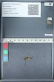 http://mczbase.mcz.harvard.edu/specimen_images/ent-lepidoptera/images/2012_01_09/IMG_110044.JPG
