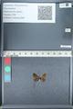 http://mczbase.mcz.harvard.edu/specimen_images/ent-lepidoptera/images/2012_01_09/IMG_110049.JPG