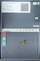 http://mczbase.mcz.harvard.edu/specimen_images/ent-lepidoptera/images/2012_01_09/IMG_110051.JPG