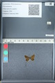 http://mczbase.mcz.harvard.edu/specimen_images/ent-lepidoptera/images/2012_01_09/IMG_110053.JPG
