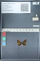http://mczbase.mcz.harvard.edu/specimen_images/ent-lepidoptera/images/2012_01_09/IMG_110058.JPG