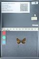 http://mczbase.mcz.harvard.edu/specimen_images/ent-lepidoptera/images/2012_01_09/IMG_110059.JPG