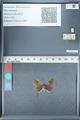 http://mczbase.mcz.harvard.edu/specimen_images/ent-lepidoptera/images/2012_01_09/IMG_110060.JPG