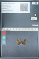 http://mczbase.mcz.harvard.edu/specimen_images/ent-lepidoptera/images/2012_01_09/IMG_110061.JPG