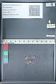 http://mczbase.mcz.harvard.edu/specimen_images/ent-lepidoptera/images/2012_01_09/IMG_110064.JPG