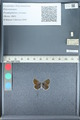 http://mczbase.mcz.harvard.edu/specimen_images/ent-lepidoptera/images/2012_01_09/IMG_110069.JPG