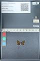 http://mczbase.mcz.harvard.edu/specimen_images/ent-lepidoptera/images/2012_01_09/IMG_110070.JPG