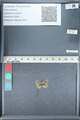 http://mczbase.mcz.harvard.edu/specimen_images/ent-lepidoptera/images/2012_01_09/IMG_110082.JPG